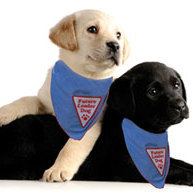 Team Page: Clarkston/Waterford/White Lake puppy raisers